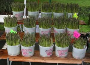 Westmorland Berry Farm's Asparagus