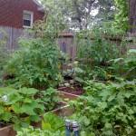 garden-628